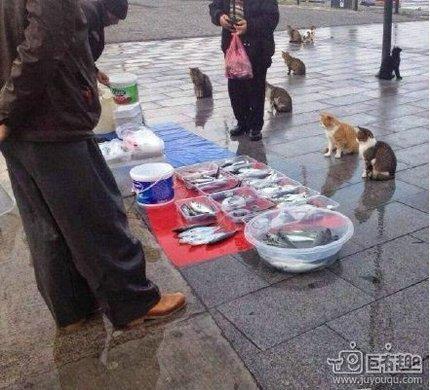 清晨,买鱼的客人陆续的来了
