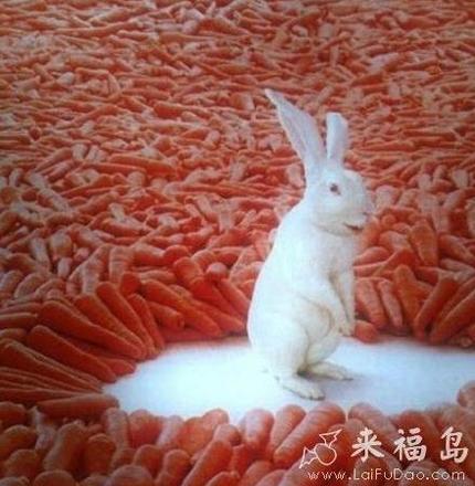 兔子里的高富帅。