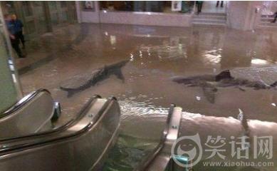 这商城还喂了鲨鱼。