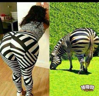 还是喜欢右边的斑马
